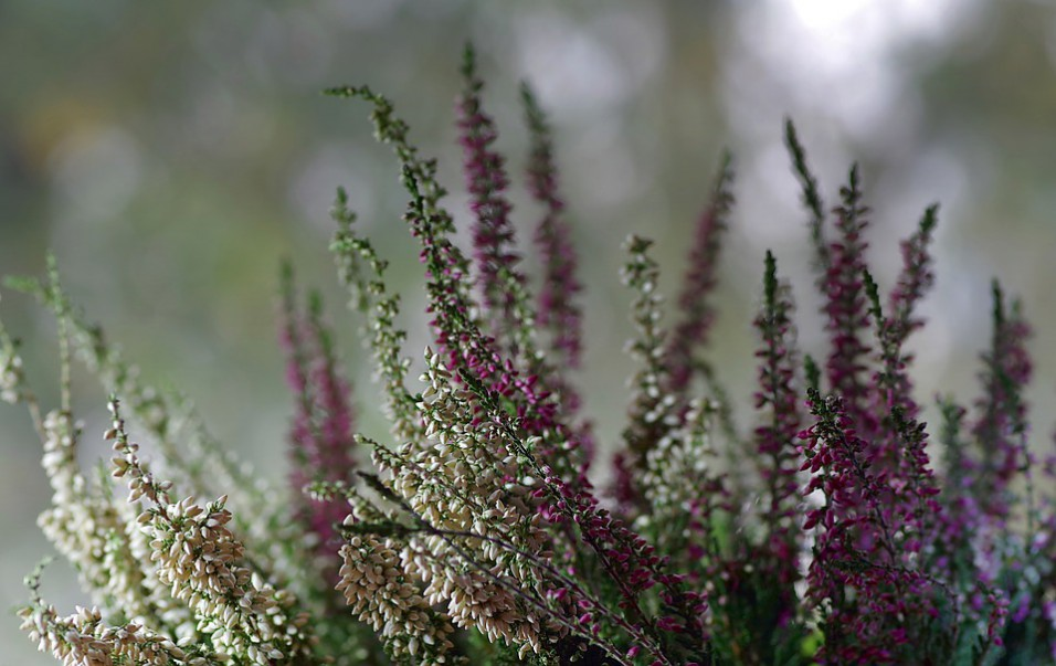 Fiori invernali da giardino e in vaso