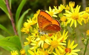 consultazione api e farfalle