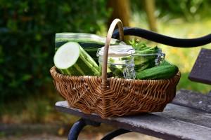 zucchini coltivazione